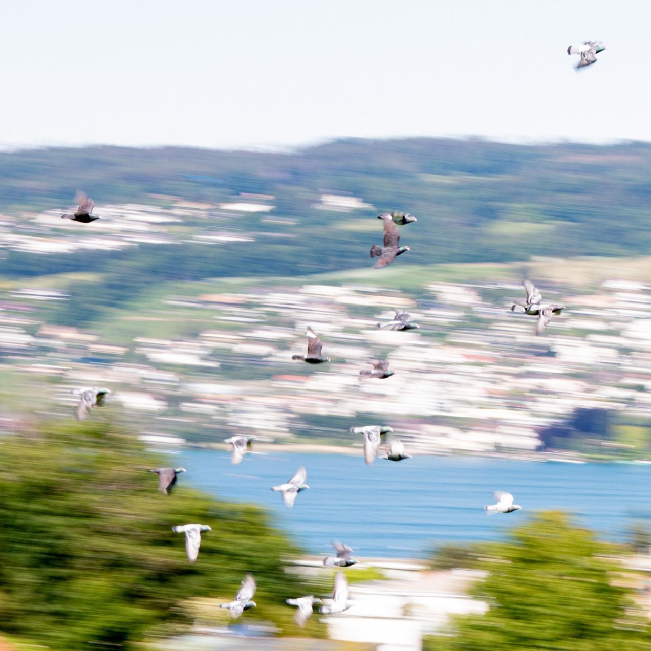 Speedy Bird Chase